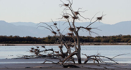 Rotten egg smell: Is Salton Sea source of California's big stink?