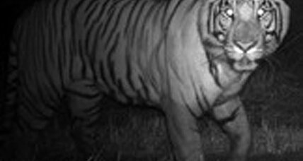 Tigers and humans can cohabitate when tigers work nights