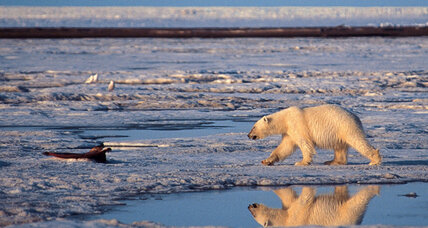 Polar bear scientist reprimanded for improper release of government documents