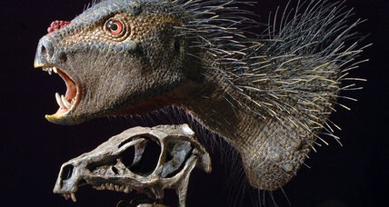 Tiny 'Dracula' dinosaur had bristles and fangs, ate veggies