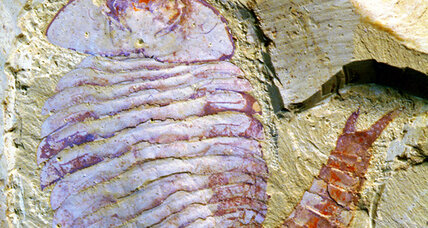 Ancient, fossilized, insect-like brain surprisingly complex