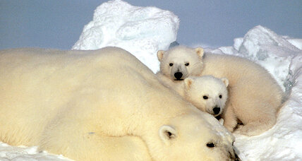 Steven Amstrup says it's not too late to save polar bears – and ourselves