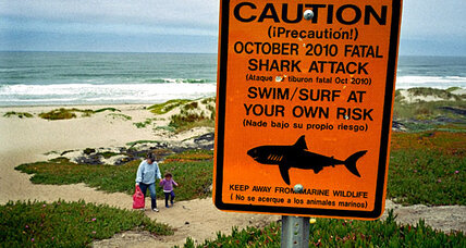 California shark attack: Why so many great white encounters this year?