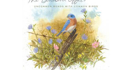 Reader recommendation: The Bluebird Effect