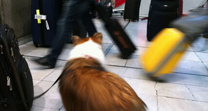 Thanksgiving travel fun? Take the dog ... or cat or bird