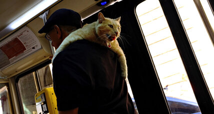 Et tu Fluffy? Rome weighs evicting cat shelter.