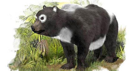Pandas' oldest known ancestor found in surprising place