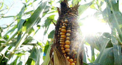 EPA rejects suspension of corn-based ethanol mandate