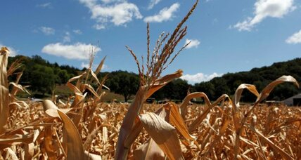 Drought: Food prices poised to rise