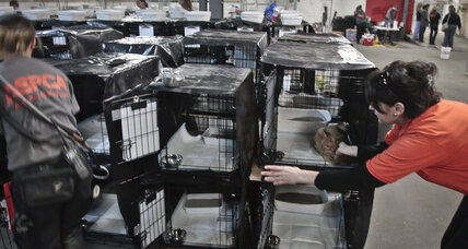 Homeless after Superstorm Sandy, some pets may be displaced again