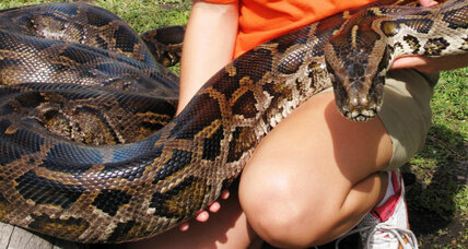 Mom rescues baby from python: Finds six-foot snake in bed [+video]