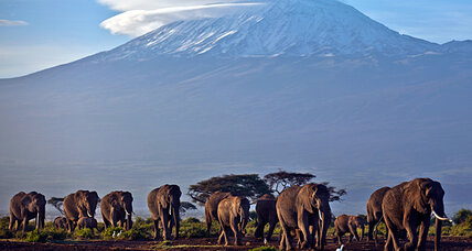 Poaching crisis escalates with 'targeted, efficient' slaughter of 12 Kenya elephants
