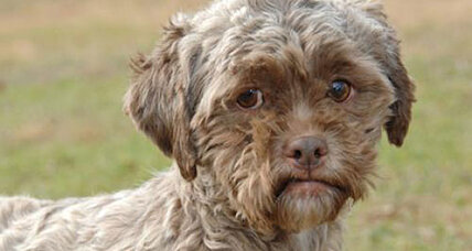 Tonik, dog with human face, up for adoption