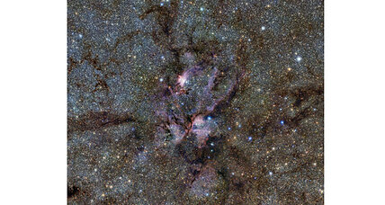 Giant space lobster? Telescope spots spectacular nebula.