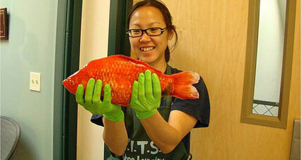 Monster goldfish found in Lake Tahoe could destroy lake's ecosystem