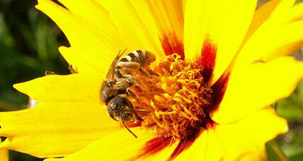 Plants 'talk' to bees with electricity, say scientists