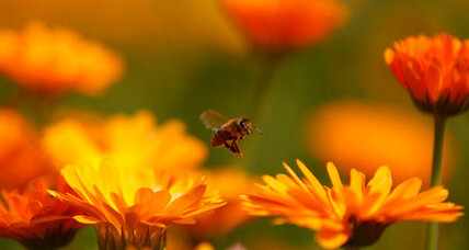 Bees use the 'force' to choose the best flowers, study finds