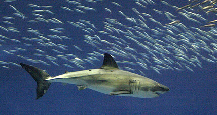 Humans kill nearly 100 million sharks each year, say conservationists