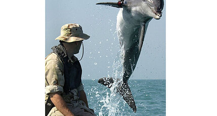 'Killer dolphins' escape? Not so fast.