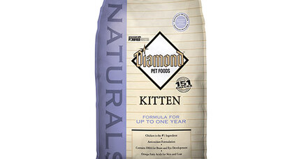 Cat food recall hits 26 states. Are you affected?