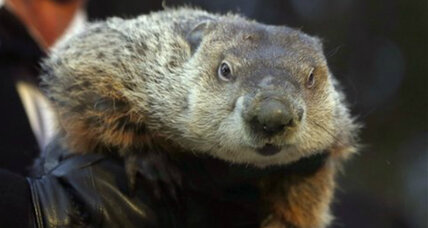 Ohio prosecutor indicts 'Punxsutawney Phil' for meteorological fraud
