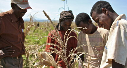 Agricultural gains in Africa crippled by funding crisis