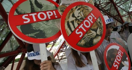 Thailand to end ivory trade?