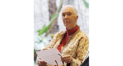 Jane Goodall: seeds of plagiarism