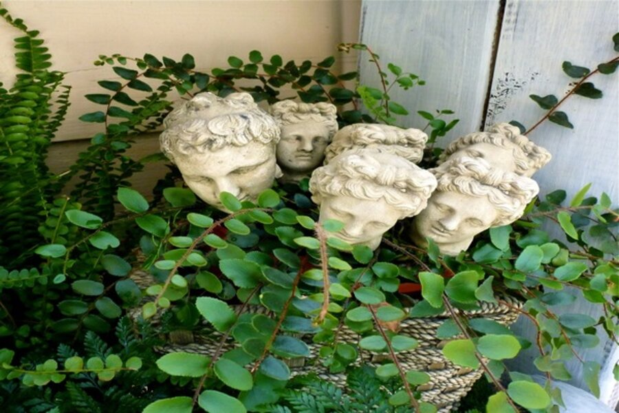 How To Successfully Grow Ferns Indoors Csmonitor Com