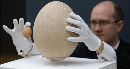 Giant egg for sale: Massive egg was laid by now-extinct giant bird
