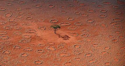 'Fairy circles' mysery solved? Tiny creators discovered.
