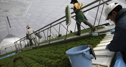 After Fukushima: Japan's new model for farms