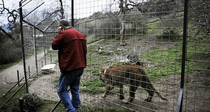 'Cous Cous' the lion innocent in death of handler, family says