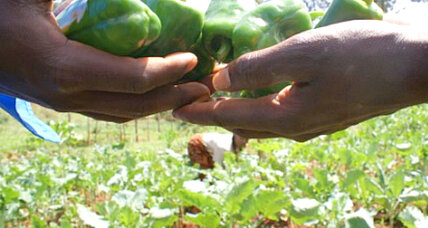 Crop insurance helps Kenya's urban poor return to farming