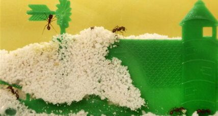 Despite techie distractions, kids still dig ant farms