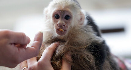 Justin Bieber's infant monkey held by German authorities