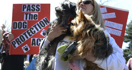 Legislation follows a slew of canines killed by police in Colorado