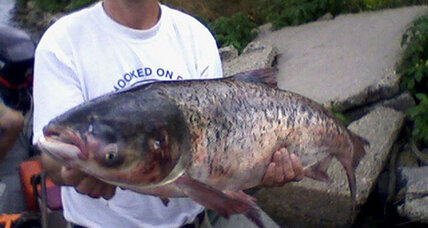 Asian carp are already in Great Lakes, new report suggests