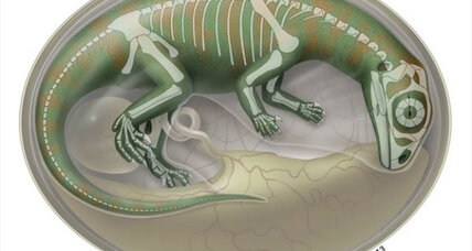 Fast-growing dinosaurs kicked inside eggs, say scientists