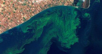 Lake Erie: big algae problems, more to come