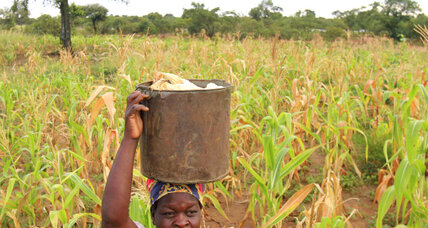 Zimbabwe's farmers dig in to capture a deluge
