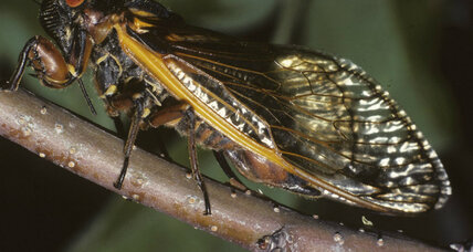 Not all Seaboard communities are battling cicada infestations, but what if yours is?