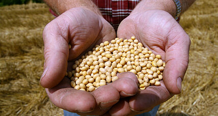 Farmers cannot replicate Monsanto seeds for second crop, Supreme Court rules (+video)