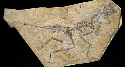 Fossil deemed bird, not dinosaur
