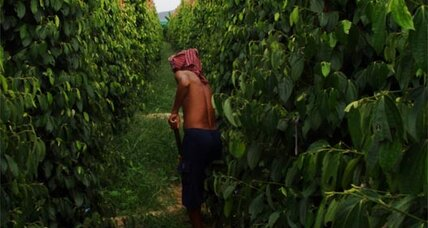 Travel: A visit to a Cambodian pepper plantation (+video)