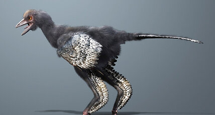World's first bird? New fossil bumps Archaeopteryx off its perch.