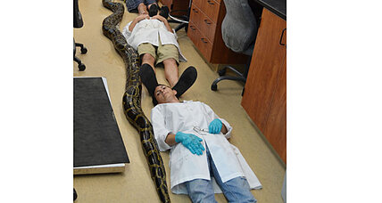 19-foot python killed in Florida