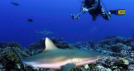 Sharks worth more in seas than in soups, study finds