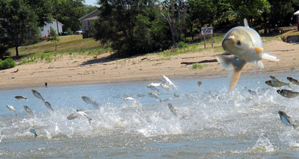 Carpe diet? Chinese firm's plan to export Asian carp could help US waterways.