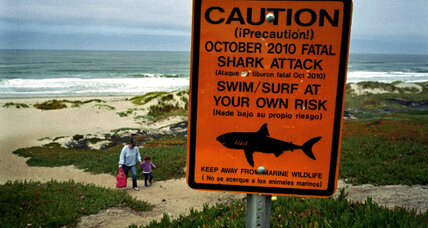 Shark attacks at Surfside: Teen punches, kicks himself loose